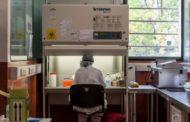 Argentina es uno de los diez países elegidos por la OMS para probar terapias contra el coronavirus