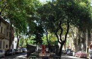 """""""Arboles de nuestra escuela"""", los árboles de La Paternal"""