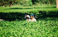 Investigación Universidad de Oxford: La exclusión digital, una barrera que golpea el trabajo de las mujeres rurales